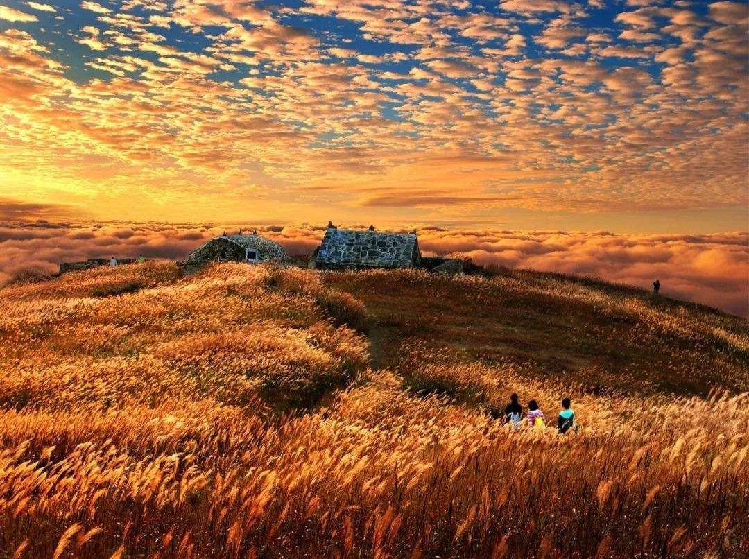 武功山十万亩草坪高山云海红叶3天休闲游