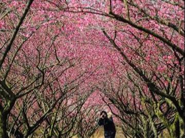 2月19长兴红梅之乡+白鹭谷徒步一日游