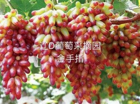 8月26日(周日)抚顺萨尔浒花海一日游