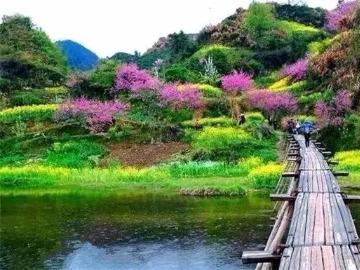 石潭村、新安江画廊、卖花渔2日游