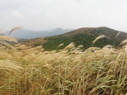 东盘山芦苇荡环线10.19