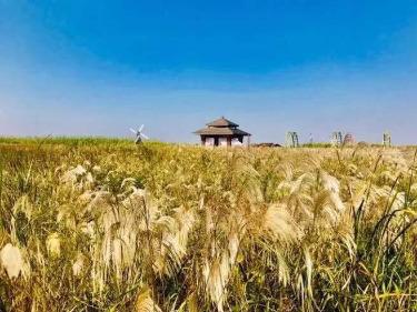杭州湾湿地公园 鸣鹤古镇一日游12.15