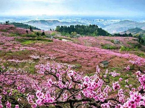 清明骑行-龙泉山桃花故里,寻找春天的故事