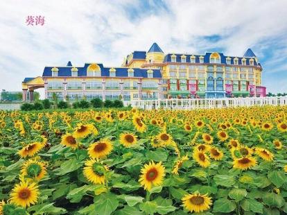 广州百万葵园花海世界