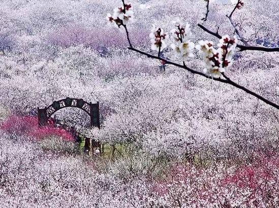 徒步穿越太湖三尖,探寻梦中的香雪海