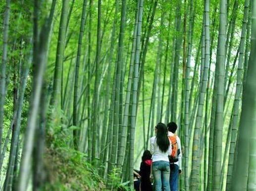 10月7日星溪竹林徒步穿越+竹筒饭
