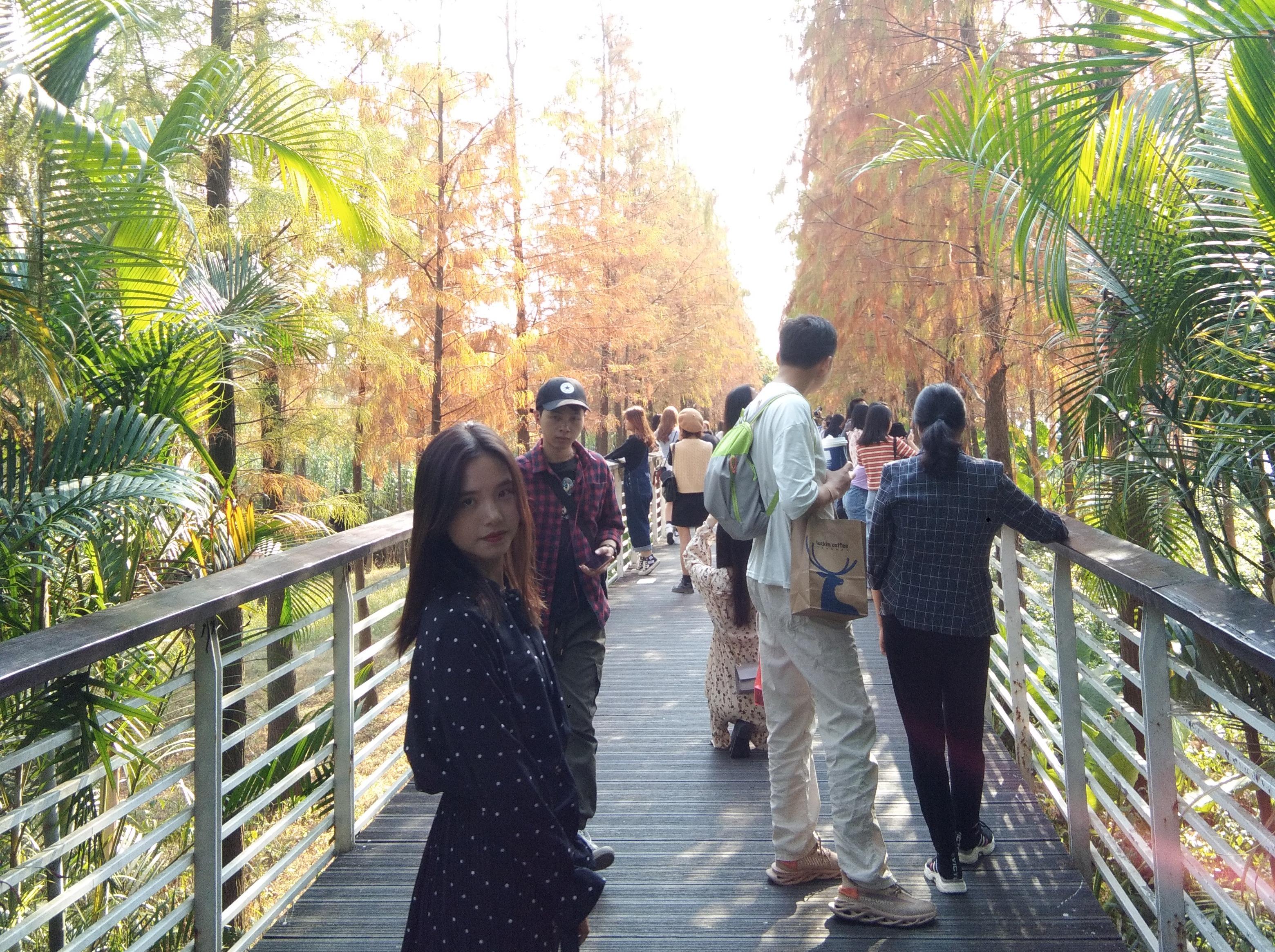 12.1落羽杉公园+火炉山徒步一日游