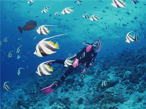 深圳南澳珊瑚潜水、快艇出海、海滨烧烤