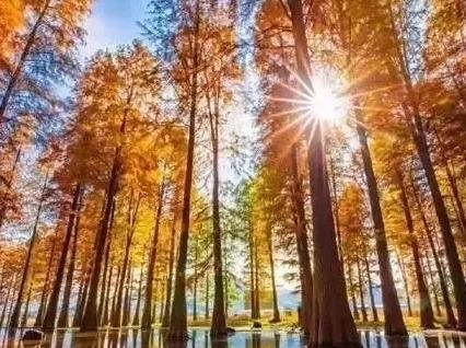 12月2日周日徒步四明湖红杉林,燕窝古道