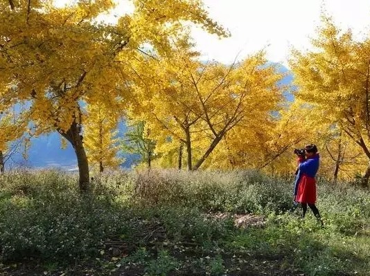 11月24日云山千亩银杏林十八涡一日游