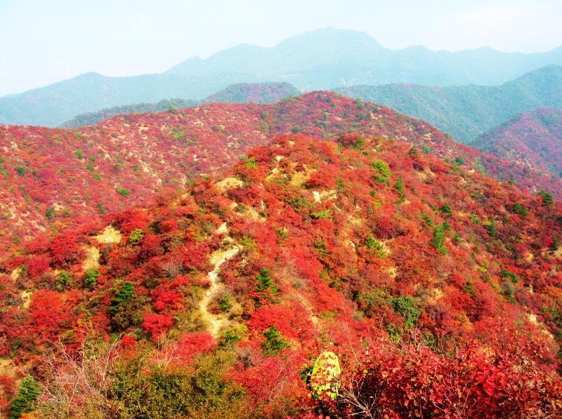 10月19号济源神沟看最美红叶,休闲腐败