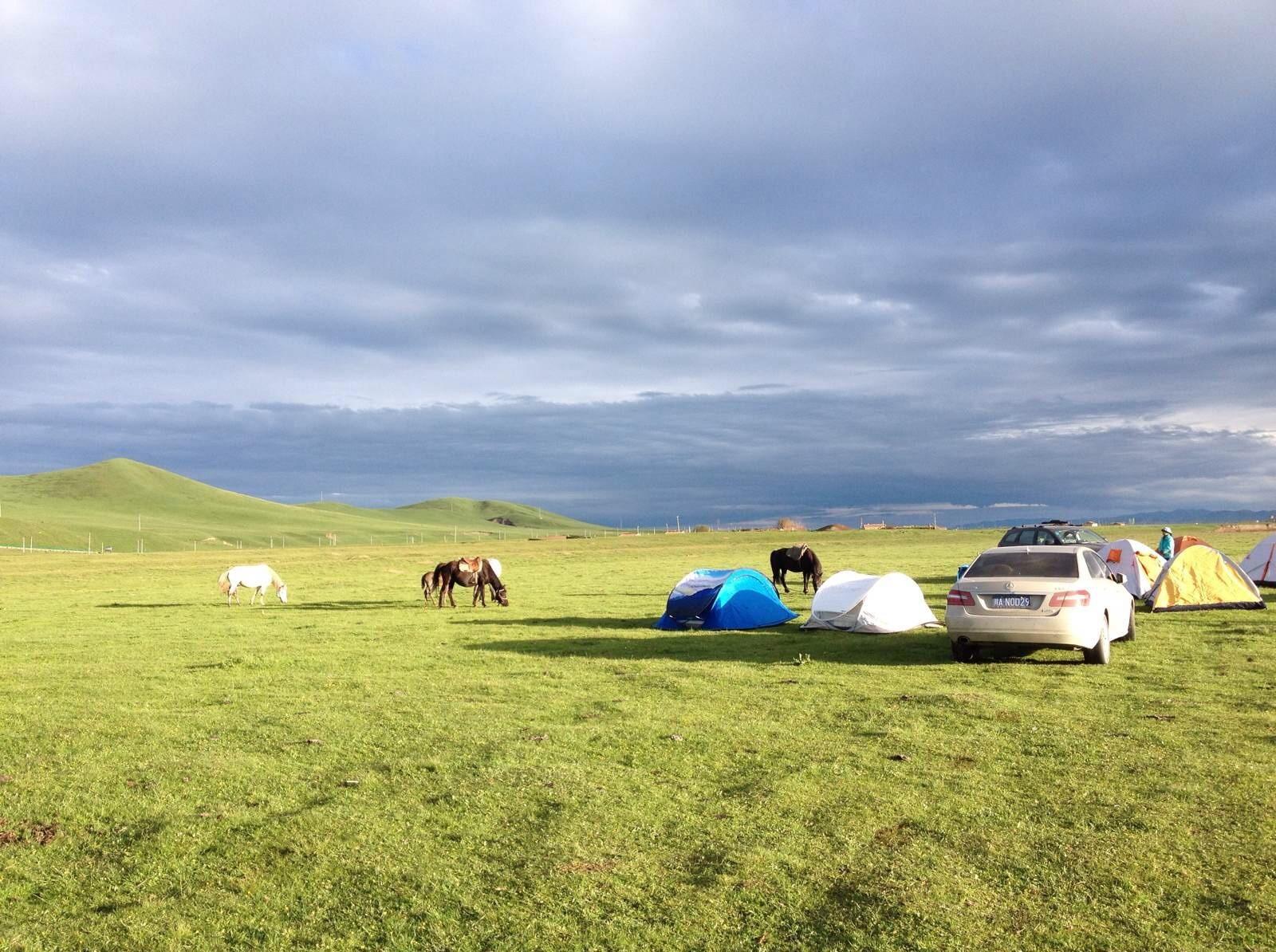 若尔盖年保玉则草原大环线,最美的草原花海