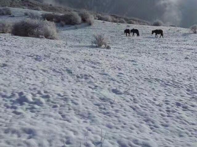 【周日】新年拉练第一波 | 熊猫坪徒步