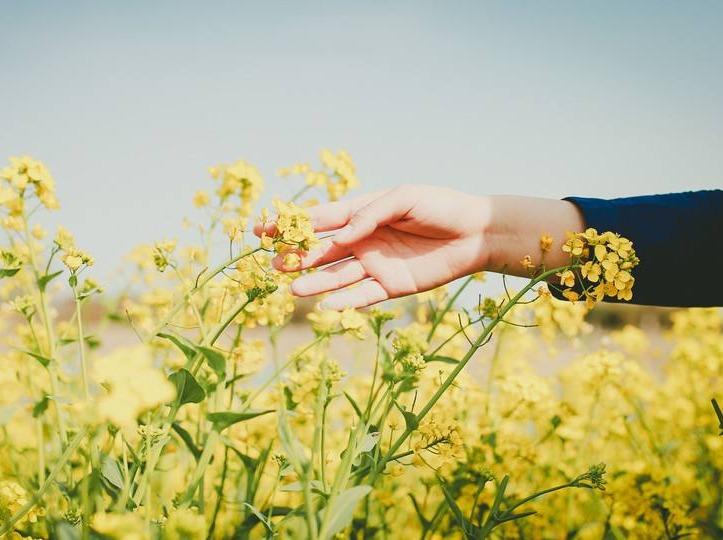 【赏花踏青活动】晒出你的阳春三月