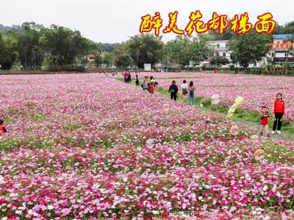 11.24日徒步广州最美乡村花都梯面