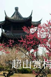 2月12号周日余杭超山风景区赏梅千年古镇一日游
