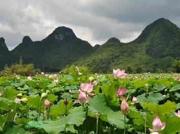 7月9日百色赏花、游船、摘葡萄一日游