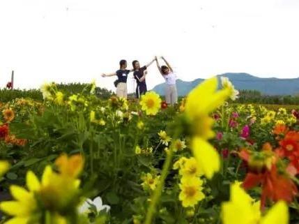 6月11号来宾开心农场一日游99元!
