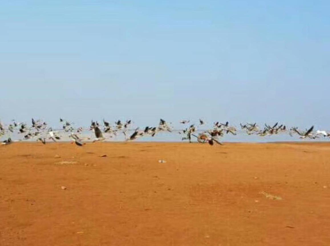 新年首次户外活动-鄱阳湖湿地公园观候鸟