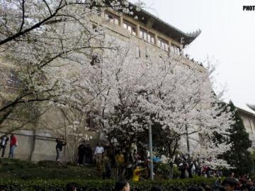 3月17日武大看樱花、东湖徒步<br>