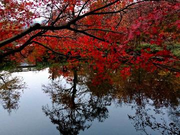 天平山赏红枫休闲爬