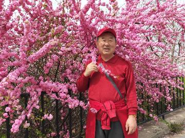 4月28日旅顺203樱花园