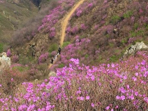 6月30日金州区大黑山赏杜鹃花一日游