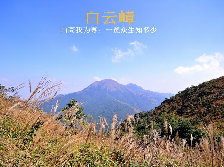 11月18日登惠州白云嶂,看漫山芦苇