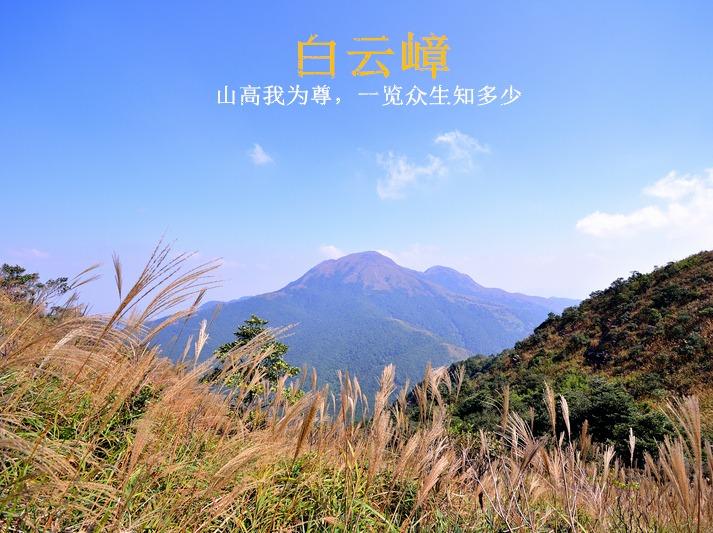 12月10日登惠州白云嶂,看漫山芦苇