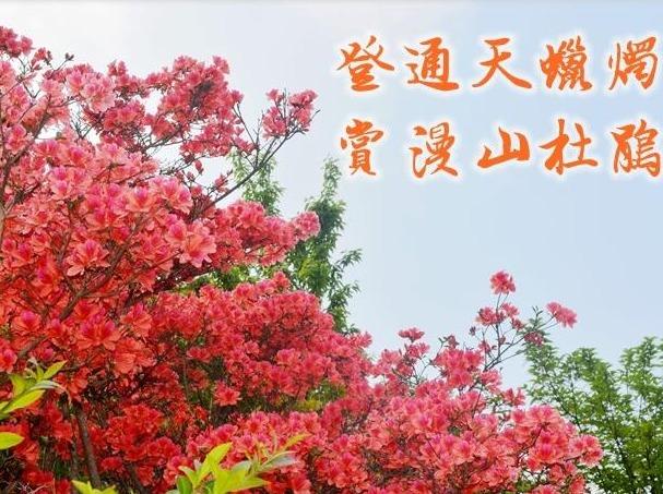 【4.9相约】勇登通天蜡烛-赏漫山杜鹃花