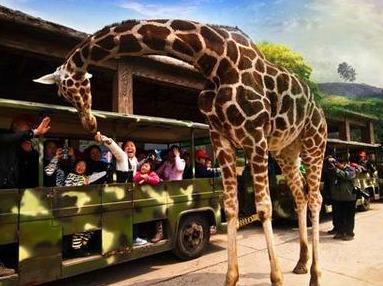 10月15日杭州野生动物园一日