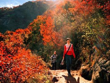 9月23金台顶赏红叶采蘑菇