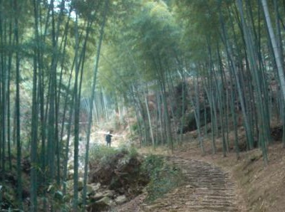 徒步虹岭古道 感受自然人文景观