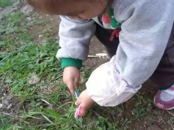 4月28日周六挖野菜+草莓采摘