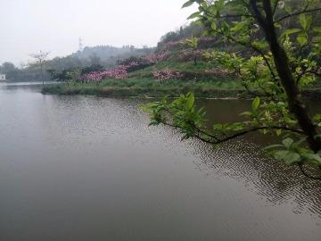 9.8龙泉山徒步宝狮湖19.9每人
