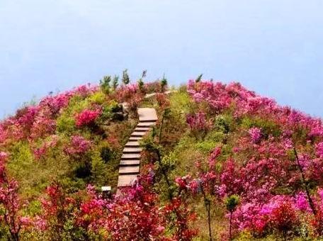 4.30周日绍兴独家路线,登山看粉色杜鹃