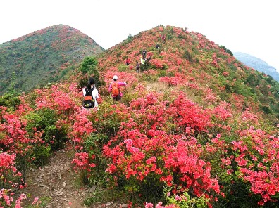 4.23周日,上堡山南嵩岩赏映山红一日游