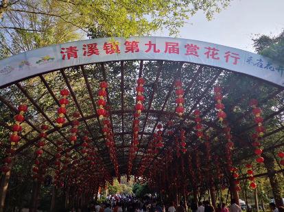 3月10日清溪大王山徒步、赏花海
