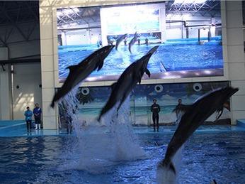 4.2号芜湖华联大白鲸海洋公园亲子一日游