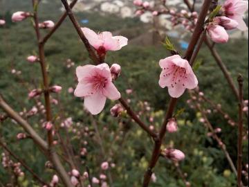 中华群西山赏梅活动