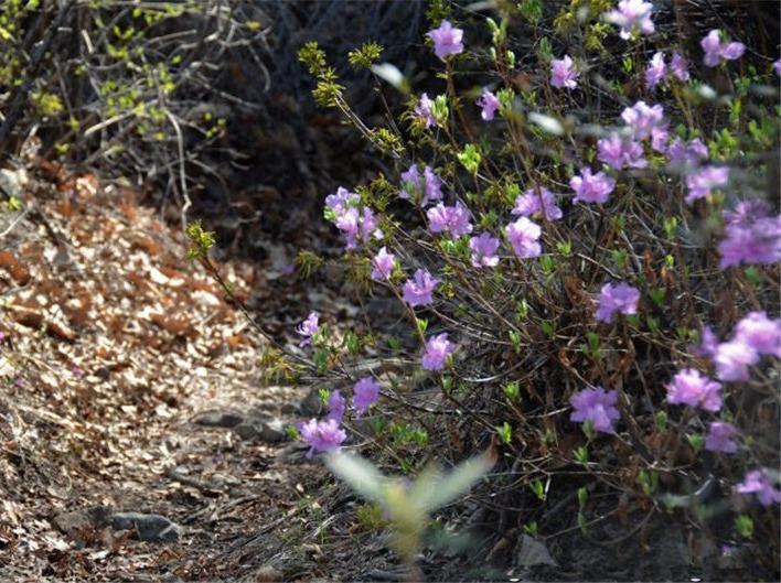 4月22日(周日)猩猩峪赏杜娟花