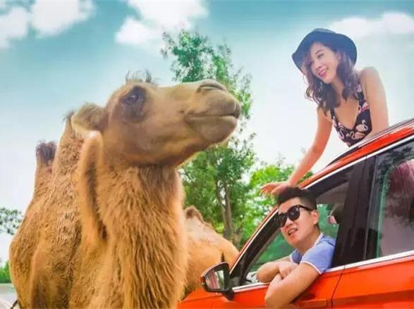 """驾车穿越""""五大洲"""",触珍奇动物一日活动"""