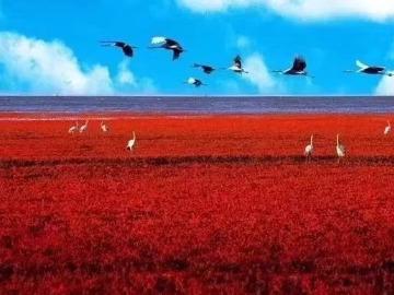 10.1-10.3国庆节红海滩休闲之旅