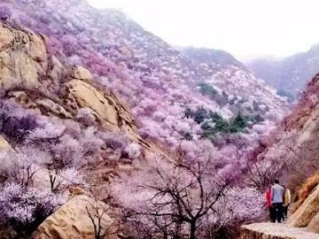 4月5号蓟县五盆沟赏花摄影一日休闲游