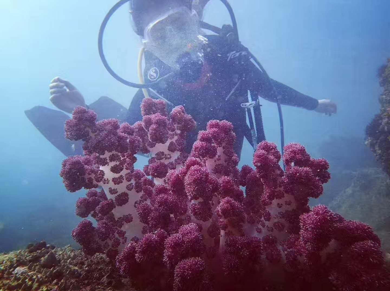 5月19日深圳南澳珊瑚潜水、烧烤一日游