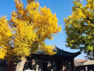 卧龙山参观高铁,寿县城看银杏落叶