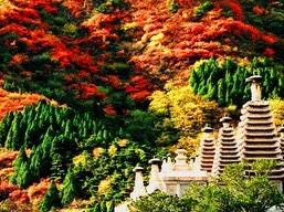 北京五日游 香山公园赏金秋红叶