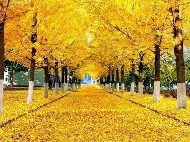 10月28日丹东市黄金大道一日游