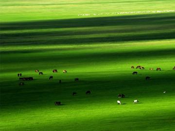 端午驴友味美价廉休闲行锡林郭勒草原