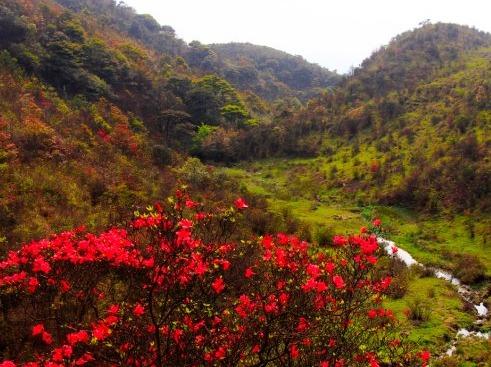 3月31日新兴天露山观赏满山烂漫野杜鹃花